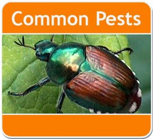 Common Pests Webpage