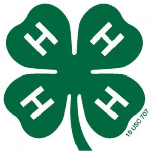 Clover emblem 04 transparent