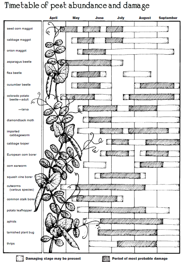 Pest Timetable