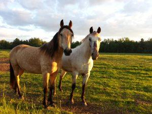 horses-1371656831ltz