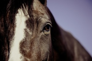 horse-594191_1920