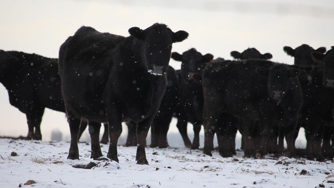 Beef Quality Assurance Bqa Training Program Extension Walworth